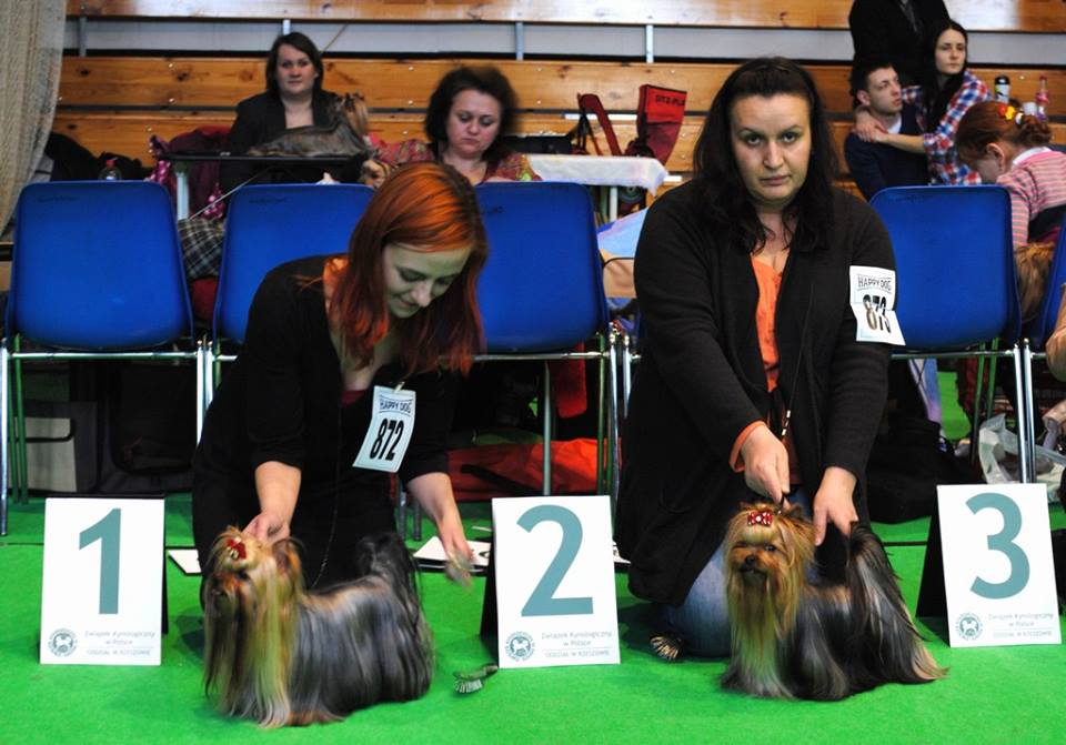 Rzeszów, International Dog Show, 15.02.2014