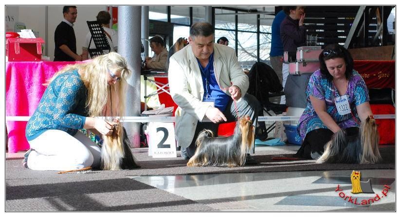 International Dog Show - Katowice, 21.03.14