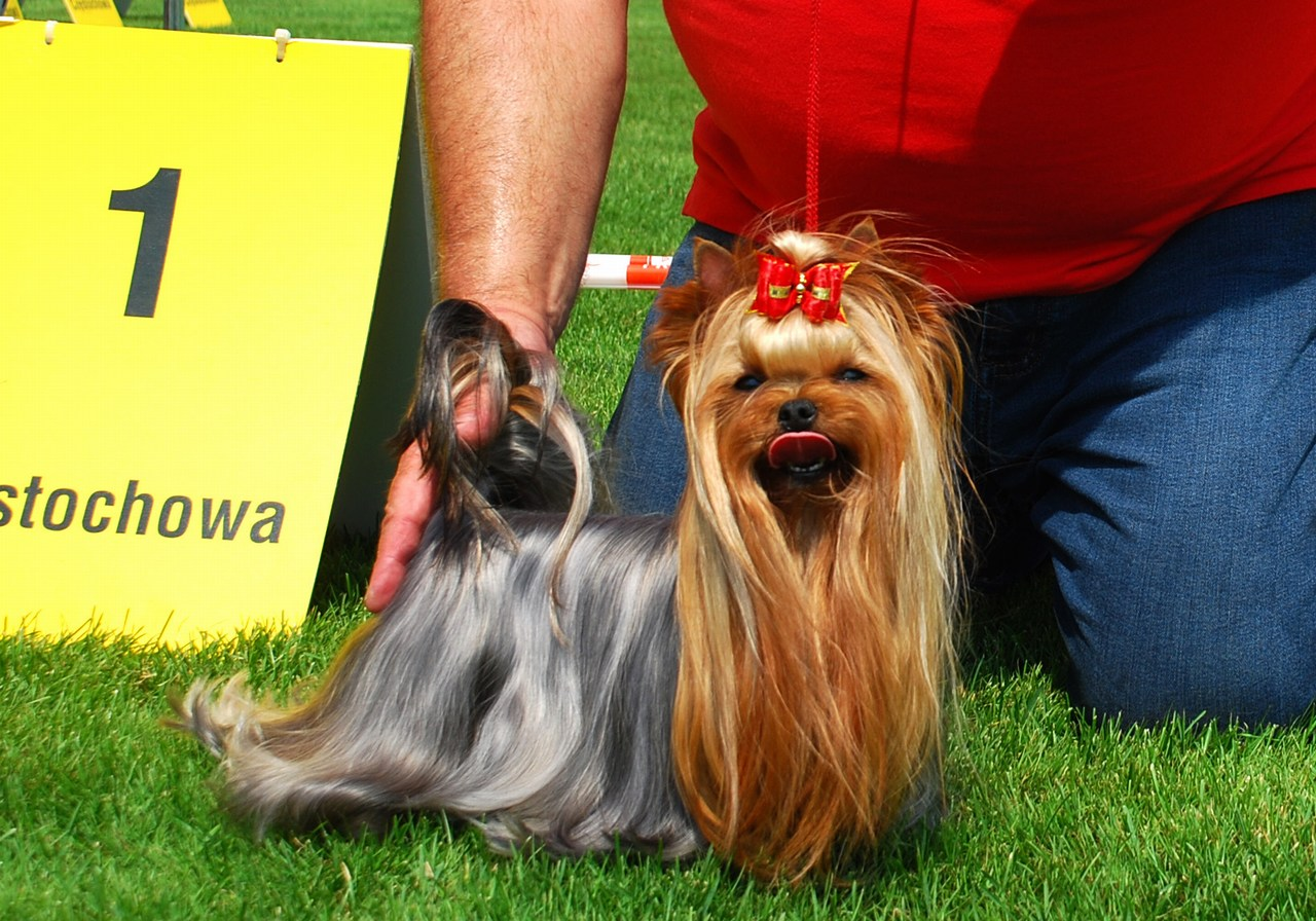 International Dog Show - Częstochowa 25.07.2015