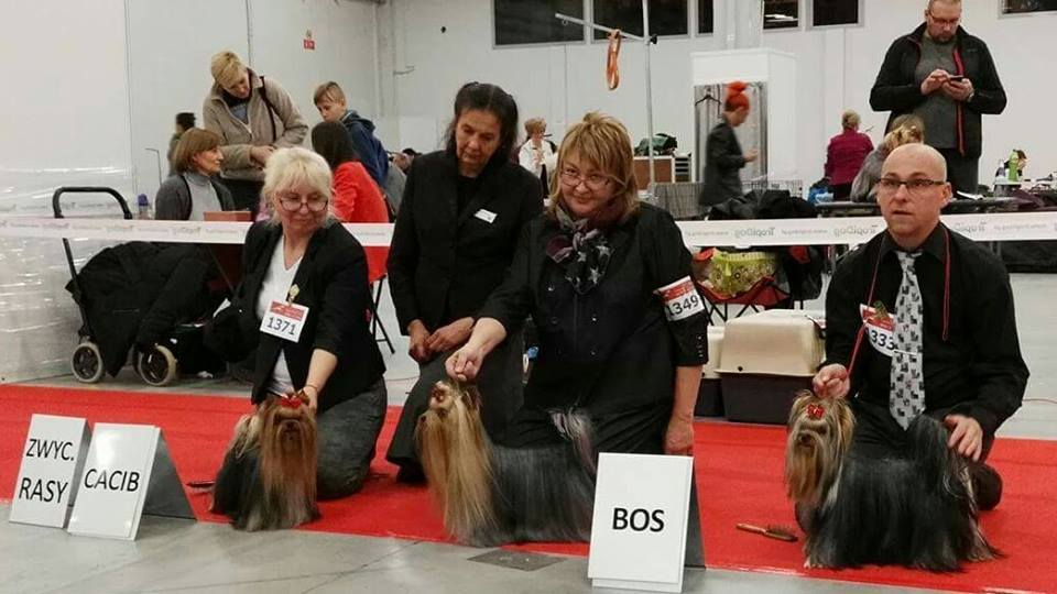 International Dog Show - Kielce, 12.11.2016